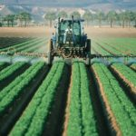 Effect of chemical insecticides in vegetable